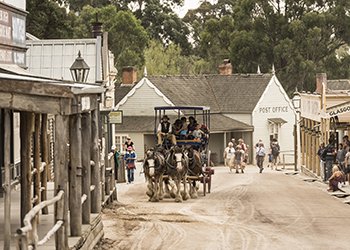Bullock team at Sovereign Hill